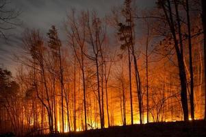 feu de forêt brûlant la nuit photo
