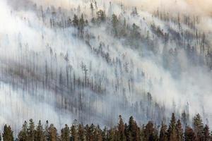 feu de forêt parc national de yellowstone montana fumée dans les arbres photo