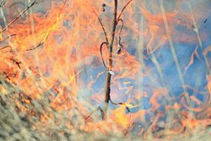 feu brûlant herbe sèche photo