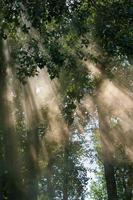 la lumière à travers la forêt