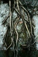 branche d'arbre à harceler pour grandir photo