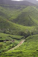cameron highland, malaisie photo