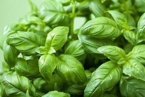 feuilles de basilic frais photo