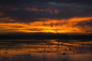 aigle ardent, lever soleil photo