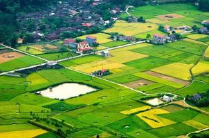 Champ de riz au moment de la récolte dans la vallée de bac son, lang son, vietnam photo