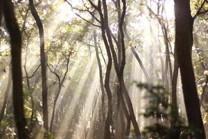 trempé dans la forêt asahi