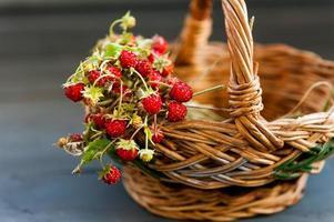 fraises des bois photo
