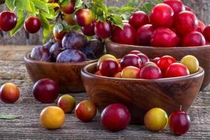 prunelles et prunes photo