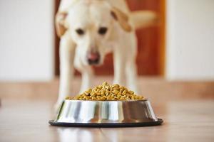 chien affamé photo