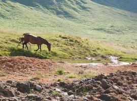 cheval dans les montagnes photo
