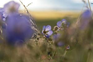 soleil d'été photo