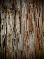 écorce d'arbre de texture naturelle photo