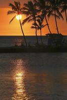silhouette de cocotiers photo