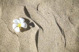 fleur de plumeria sur la plage