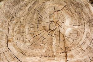 fond de texture bois / texture bois photo