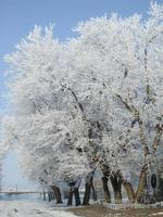 gel de printemps photo