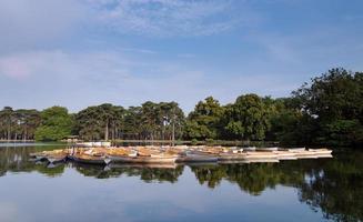paris, bateaux à rames en bois de boulogne photo