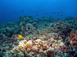scène de récif hawaïen à kona photo