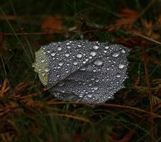feuille après la pluie