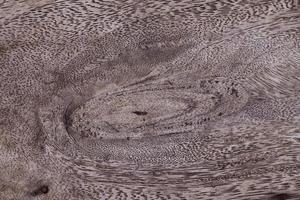 Texture du bois.