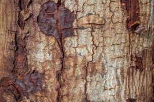 texture du bois (arbres de forêt) photo