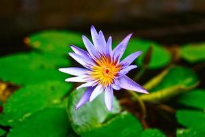 beauté naturelle photo