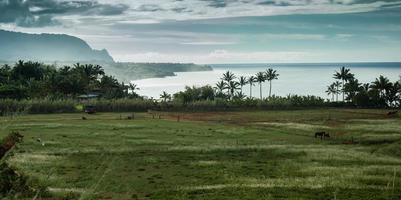 paysage de kauai avec champs chevaux océan et montagne