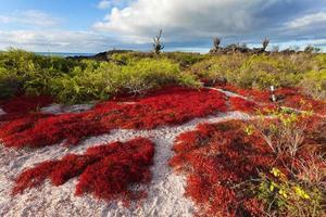 île de floreana, îles galapagos, équateur