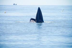 baleine photo