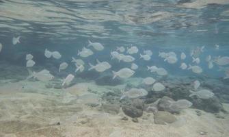 banc de poissons dans la baie de hanauma