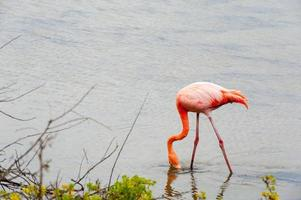 animaux des Galapagos