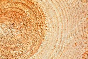 anneaux annuels sur bois de pin scié