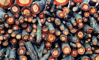 pile de bois de chauffage de chêne photo