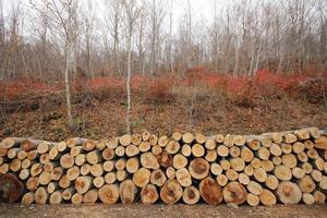 stock de bois photo