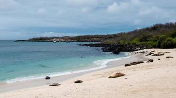 san cristobal - galapagos photo