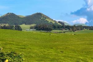 champs le long de la route de montagne kohala, grande île photo