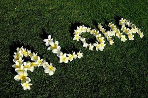 aloha de hawaii photo