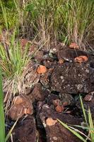 pu'u o mahuka heiau, site sacré sur oahu, hawaii photo