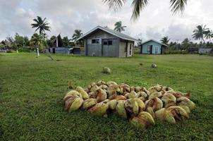 Cocotier dans les îles Cook de la lagune d'Aitutaki