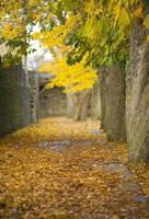 le site du patrimoine mondial de l'unesco visby.gn photo