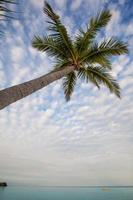 île de plantation fidji verticale avec palmier photo