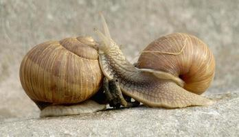 famille d'escargots photo