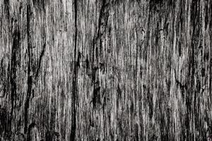 texture du bois avec des motifs naturels photo