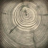 texture de coupe en bois photo