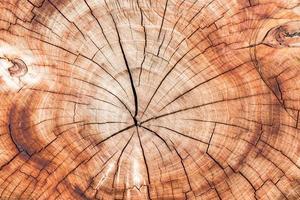 texture de branche en bois.
