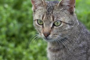 portrait de chat