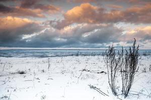 paysage côtier d'hiver avec de l'herbe sèche