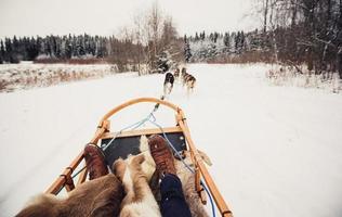 chiens de traîneau en Finlande centrale photo