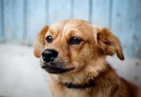 portrait de chien photo