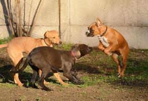 portrait de chiens photo